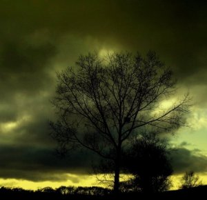 Dark Green stormy tree on horizon image Davena