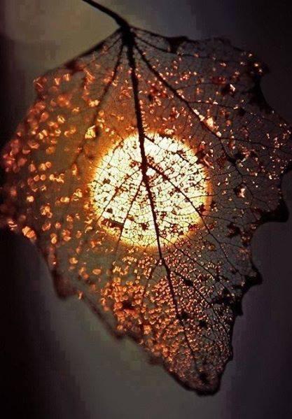 Moon Leaf
